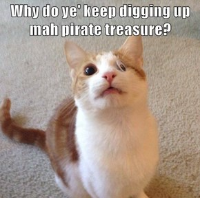 Why do ye' keep digging up mah pirate treasure?