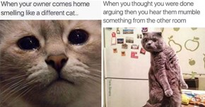 15 Moments When Relatable Cat Memes Made You Giggle