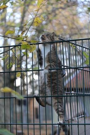 Climbing Tomcat