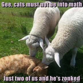 Gee, cats must not be into math  Just two of us and he's zonked