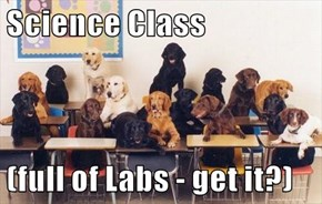 Science Class  (full of Labs - get it?)