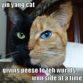 yin yang cat  givins peese to teh wurlds. . . wun side at a time