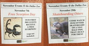 Obvious Plant Comes up With a Bunch of Hilarious Fake Events for the Dallas Zoo