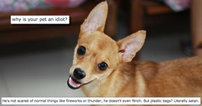 People Share the Funniest Reasons Why Their Pets Are Idiots