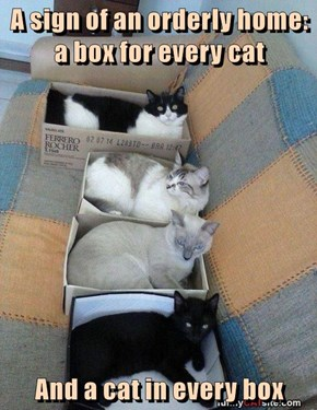 A sign of an orderly home:  a box for every cat  And a cat in every box