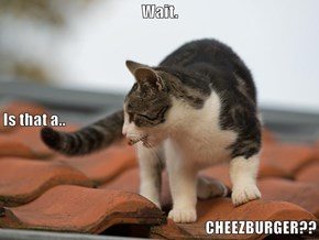 Wait.  Is that a.. CHEEZBURGER??