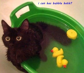 i can has bubble bath?
