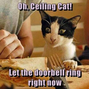 Oh, Ceiling Cat!  Let the doorbell ring right now