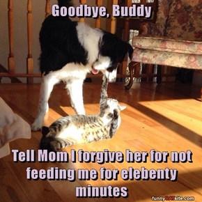 Goodbye, Buddy