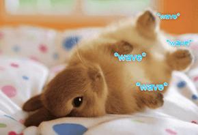 The Comfee Sofa Greeting, Bunny Edition