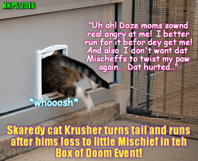 In an amazing display of cowardice for a kittie, after Krusher lost to Mischeff in teh Box of Doom, and as angry moms shouted at hims from teh audience, Krusher hightailed it out of teh Arena! He even forgot to pick up hims Silver Medal for Sekond Place!