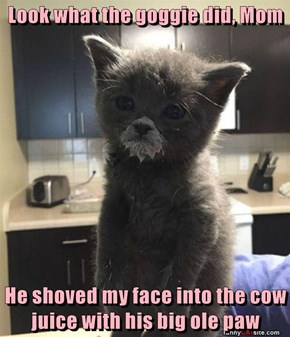 Look what the goggie did, Mom  He shoved my face into the cow juice with his big ole paw