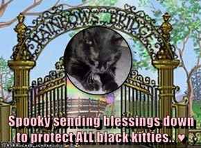 Spooky sending blessings down to protect ALL black kitties.. ♥