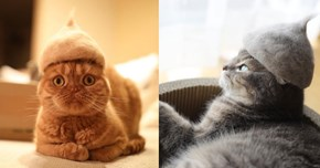 The Latest Must-Have Accessory for Cats in Japan Is a Hat Made out of Their Own Fur