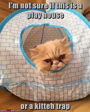 I'm not sure if this is a play house  or a kitteh trap