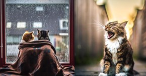 This Talented Photographer Proves That Not All Cat Photos Are Created Equal