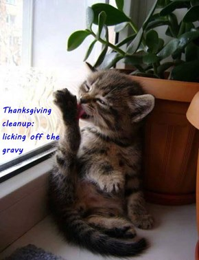 Thanksgiving                                                                                           cleanup:                                                            licking off the