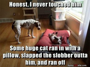 Honest, I never touched him  Some huge cat ran in with a pillow, slapped the slobber outta him, and ran off