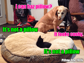 may there will be a fight ON the pillow