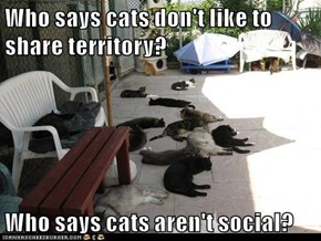 Who says cats don't like to share territory?  Who says cats aren't social?