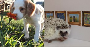 """Just a Bunch of Cute Animal Photos That Will Make You Feel """"Hashtag Blessed"""""""