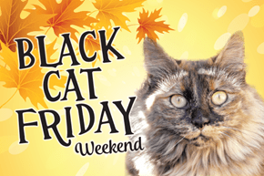 THIS Weekend! Valley Humane Society's (partial) Black Cat Friday Weekend