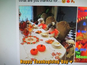 Happy  Thanksgiving  Day  ♥