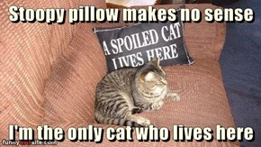 So Where Is the Spoiled Cat?