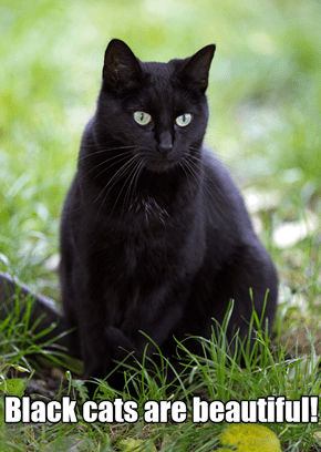 Black Cats Are Beautiful!