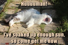 Huuuuman!  I've soaked up enough sun, so come get me now