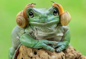 Frog With Snails on Its Head Resembling Princess Leia Inspires Epic Photoshop Battle