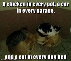 A chicken in every pot, a car in every garage,  and a cat in every dog bed