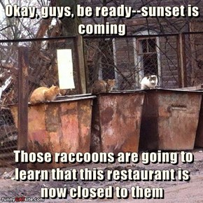 Okay, guys, be ready--sunset is coming   Those raccoons are going to learn that this restaurant is now closed to them