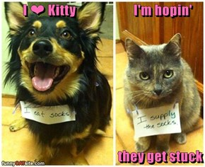 I ❤ Kitty                       I'm hopin'                                                 they get stuck