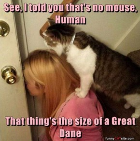 See, I told you that's no mouse, Human  That thing's the size of a Great Dane