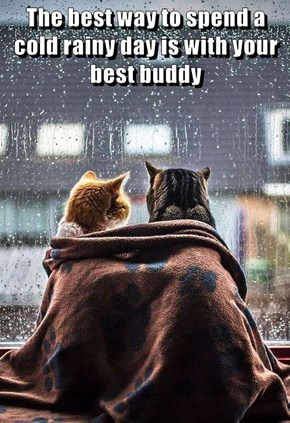 The best way to spend a cold rainy day is with your best buddy