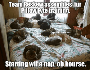 Training is VERY important fur teh Pillow Fyte 2016