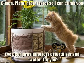 "C'mon, Plant, grow faster so I can climb you  I've been providing lots of fertilizer and ""water"" for you"