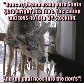 """""""Dancer, please make sure Santa gets it right this time. The catnip and toys go into MY stocking.   And the coal goes into the dog's""""!"""