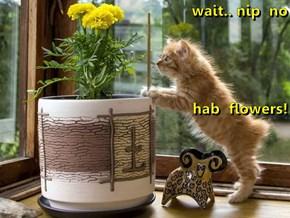 wait.. nip  no  hab  flowers!