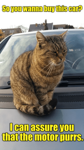 Car Salesman Cat