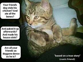 Kitty thinks I need new friends   (recaption: http://tinyurl.com/hq6b76u