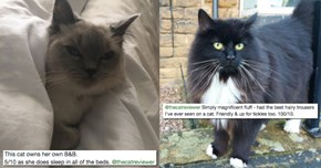"""The Cat Reviewer Encourages People to """"Review"""" Every Cat They're Lucky Enough to Encounter"""