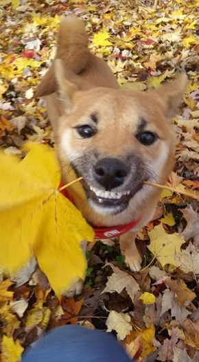 May We All Be as Happy as This Dog With a Leaf