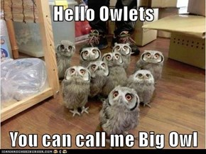 Hello Owlets  You can call me Big Owl