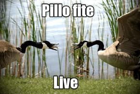 PiLOL Fite 2016