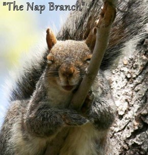 """The Nap Branch"""