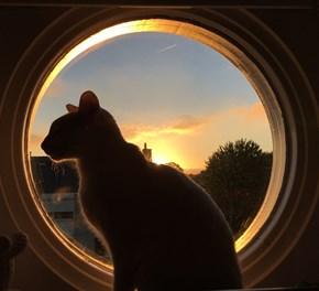 Majestic Sunset Kitty