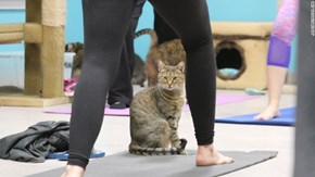 An Animal Foundation in Georgia Is Offering Yoga Classes With Cats That Will Make You Say Nameowste