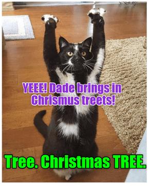 Tree. Christmas TREE.